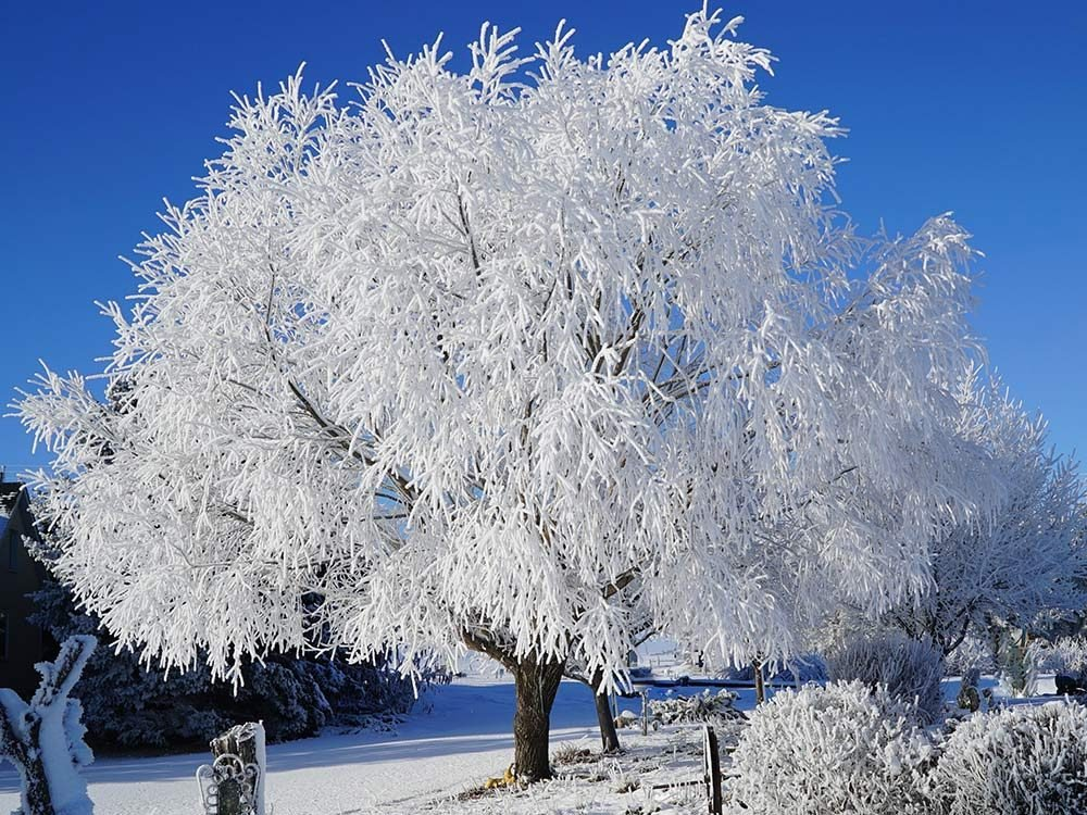 Tree covered in frozen snow in winter