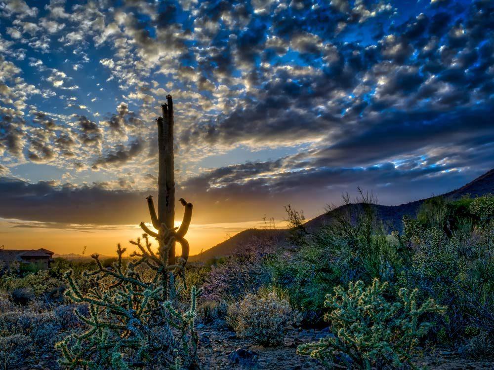 Scottsdale, Arizona desert