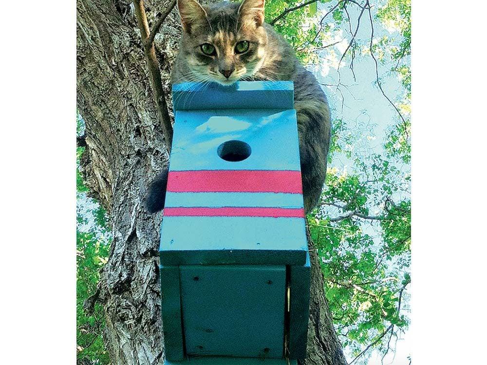 Cat sitting atop a birdhouse
