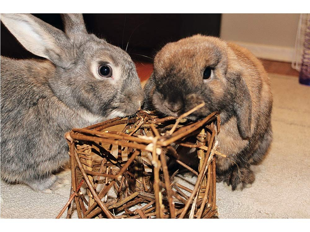 Two furry rabbits