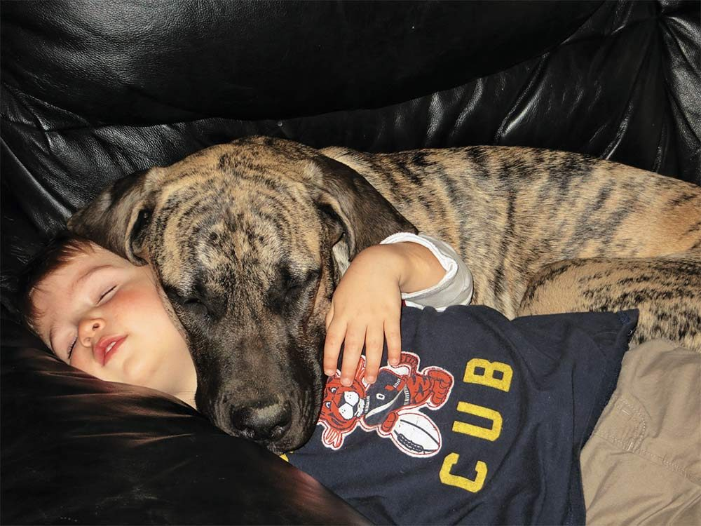 Boy and his dog sleeping on couch