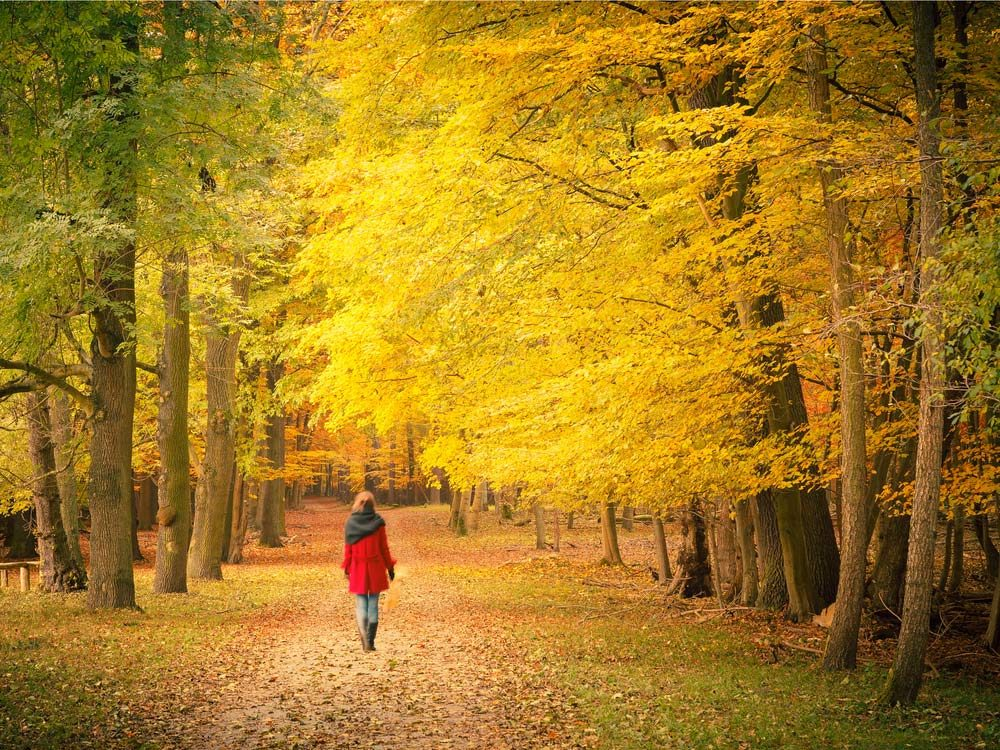 Woman taking a walk in autumn landscape