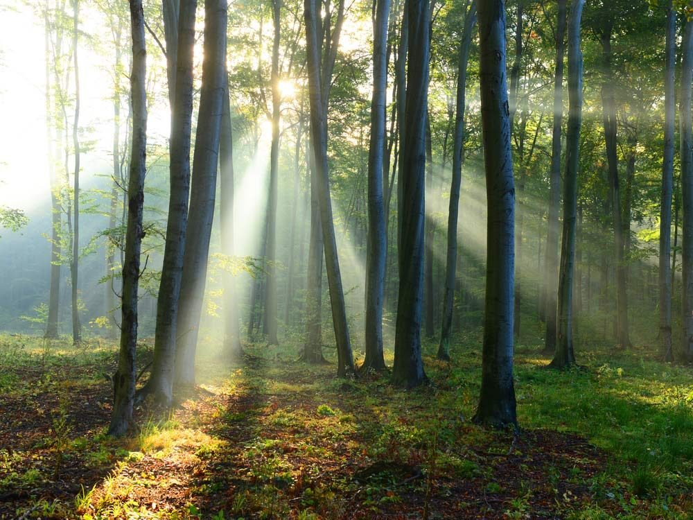 Sun shining through forest