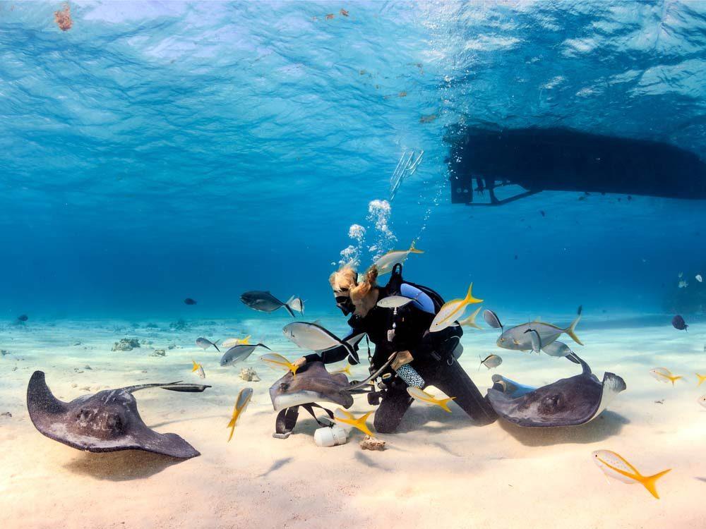 Stingrays at the Grand Cayman Islands