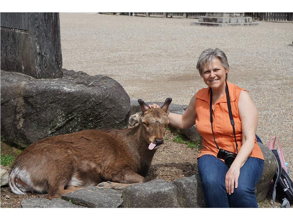 Deer zoo in Japan