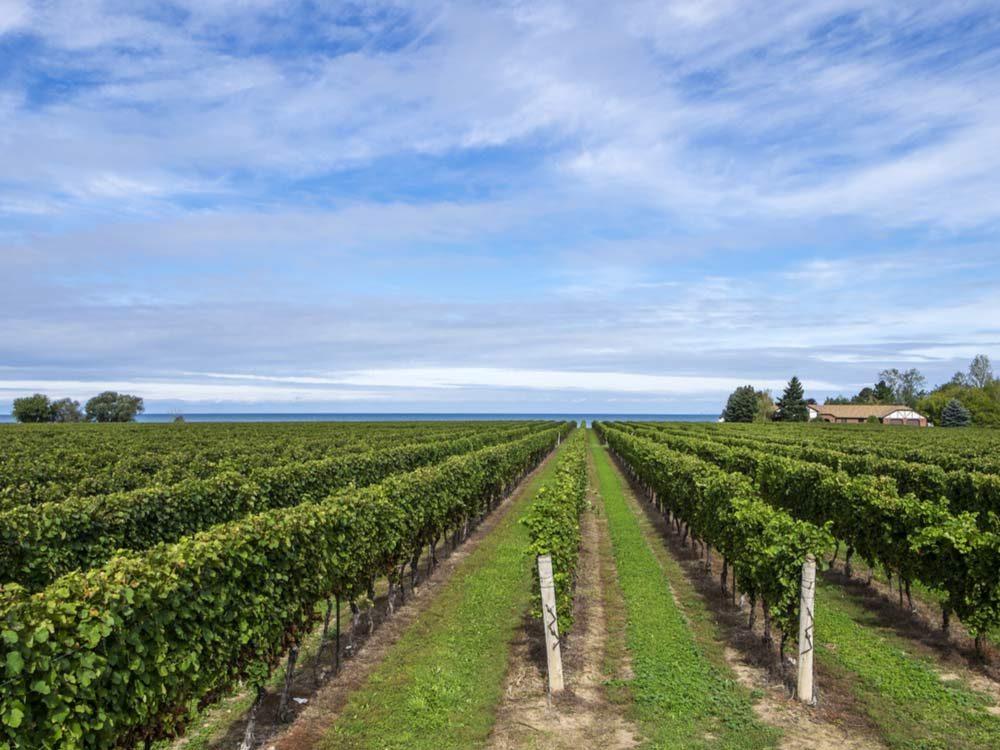 Tour a vineyard
