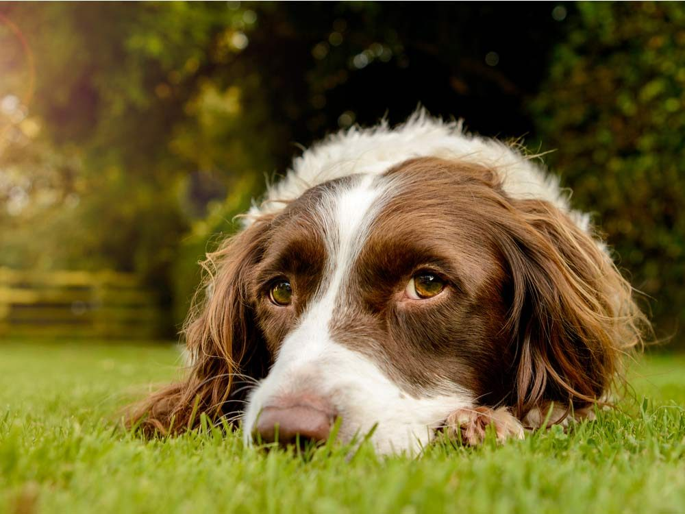 Use mothballs to keep pets away from the garden
