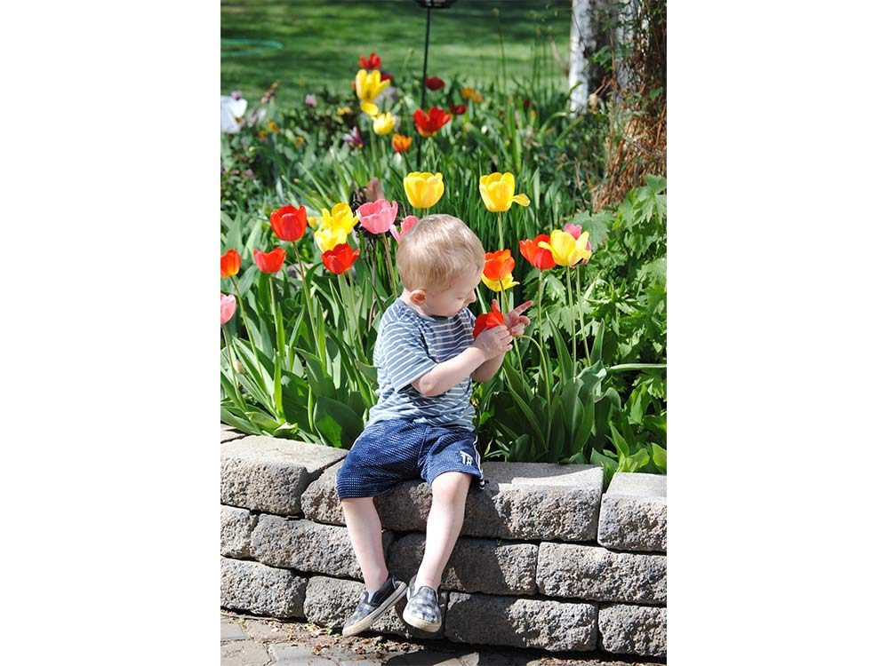 Little boy playing with tulips