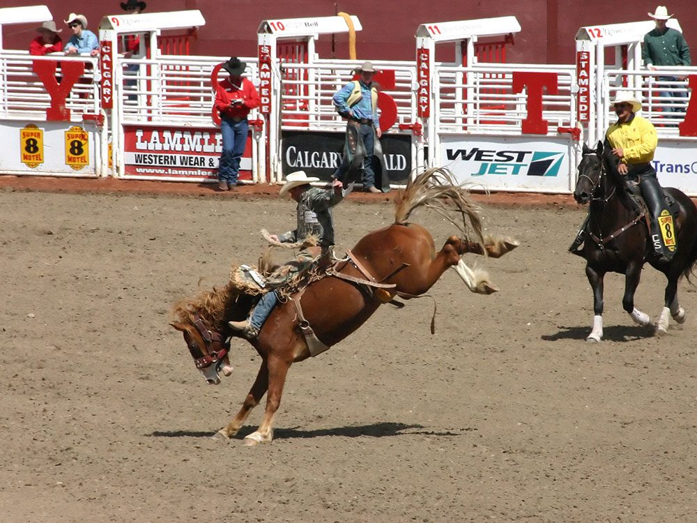 Things to do in Calgary: Calgary Stampede