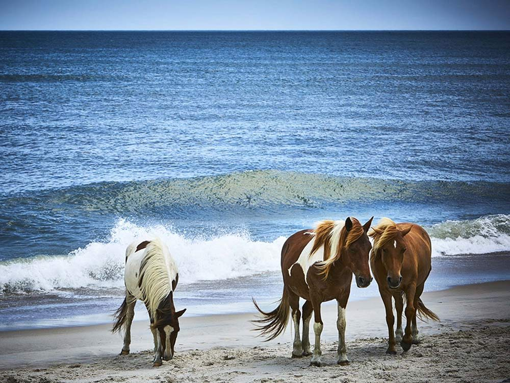 Assateague Island in Virginia