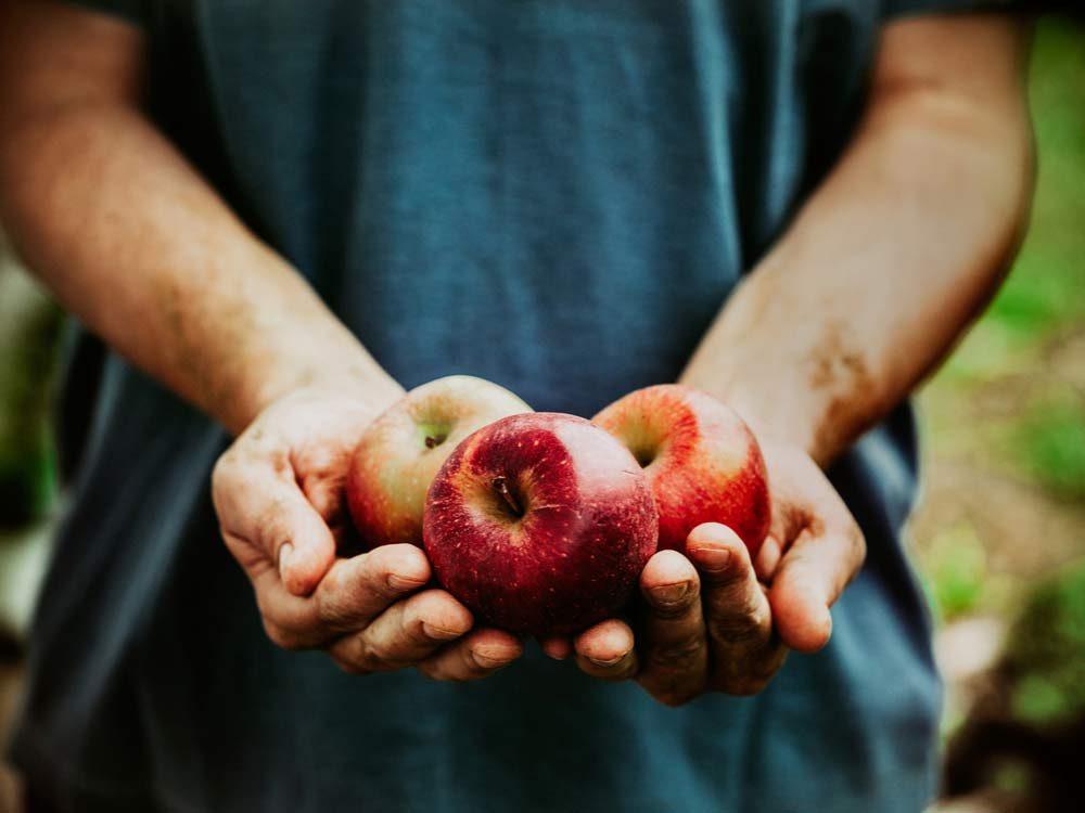 Farmer with fresh organic red apples