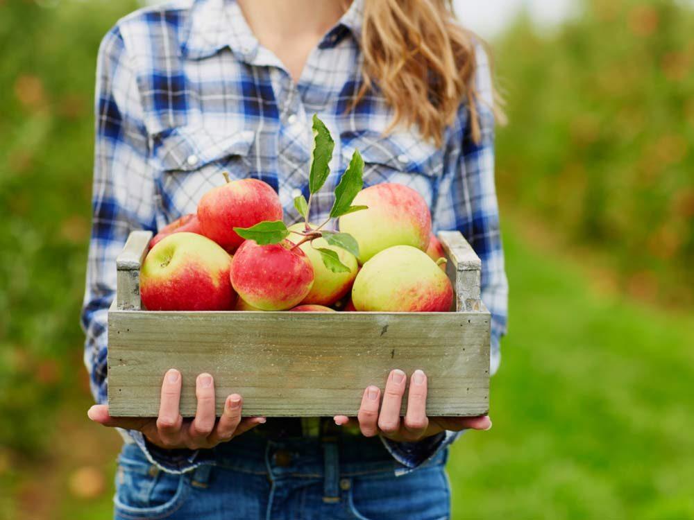 Woman holding basket of fresh apples