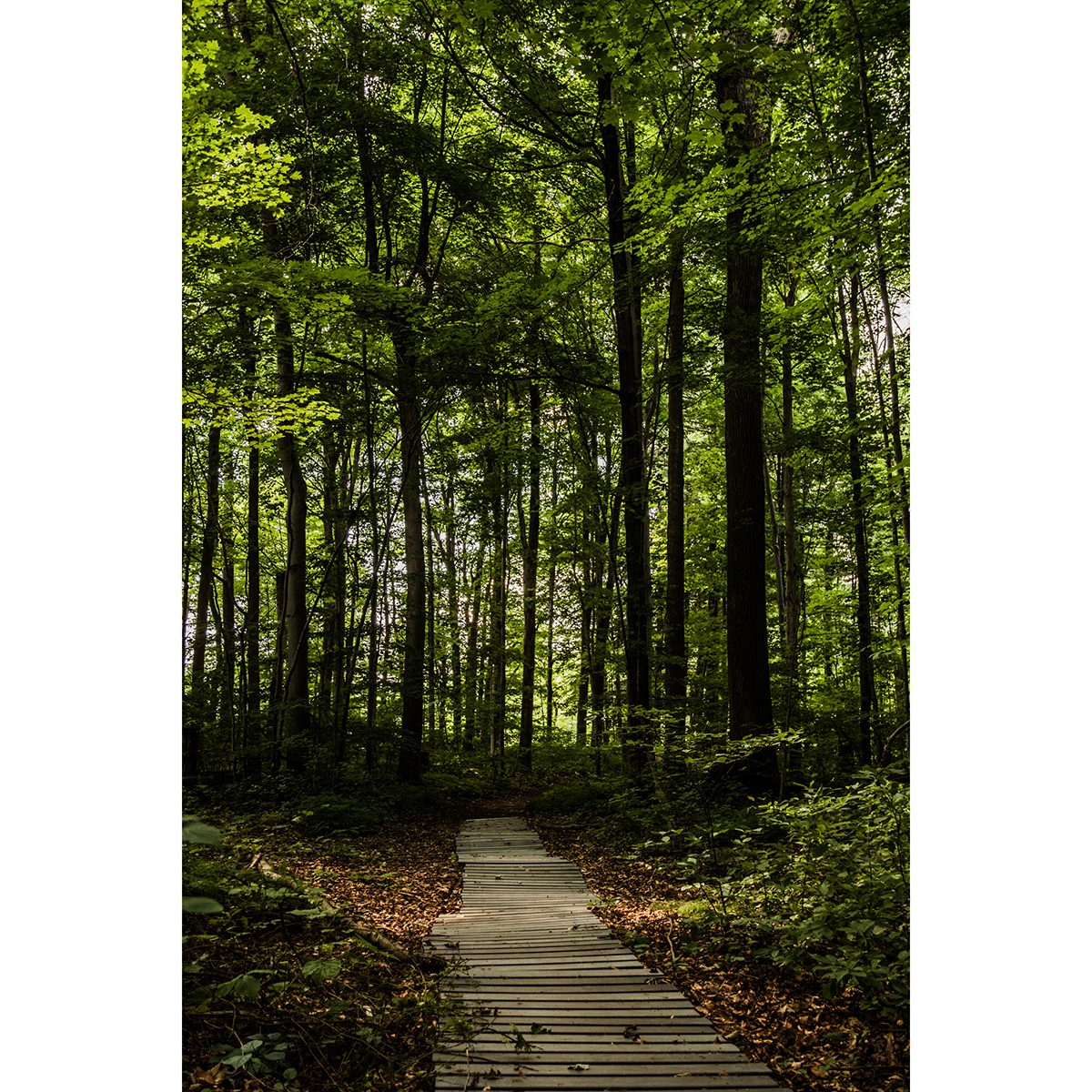 Day trips from Toronto - Guelph Arboretum Trail