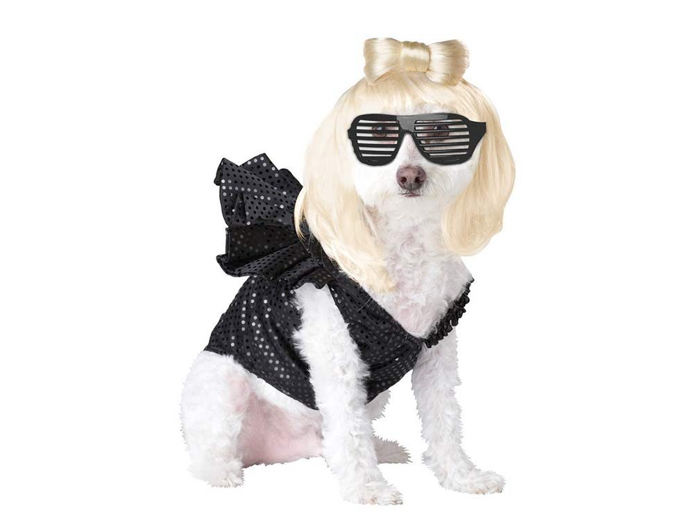 Dog dressed up as paparazzi