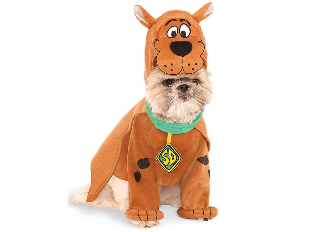 Dog dressed up as Scooby Doo