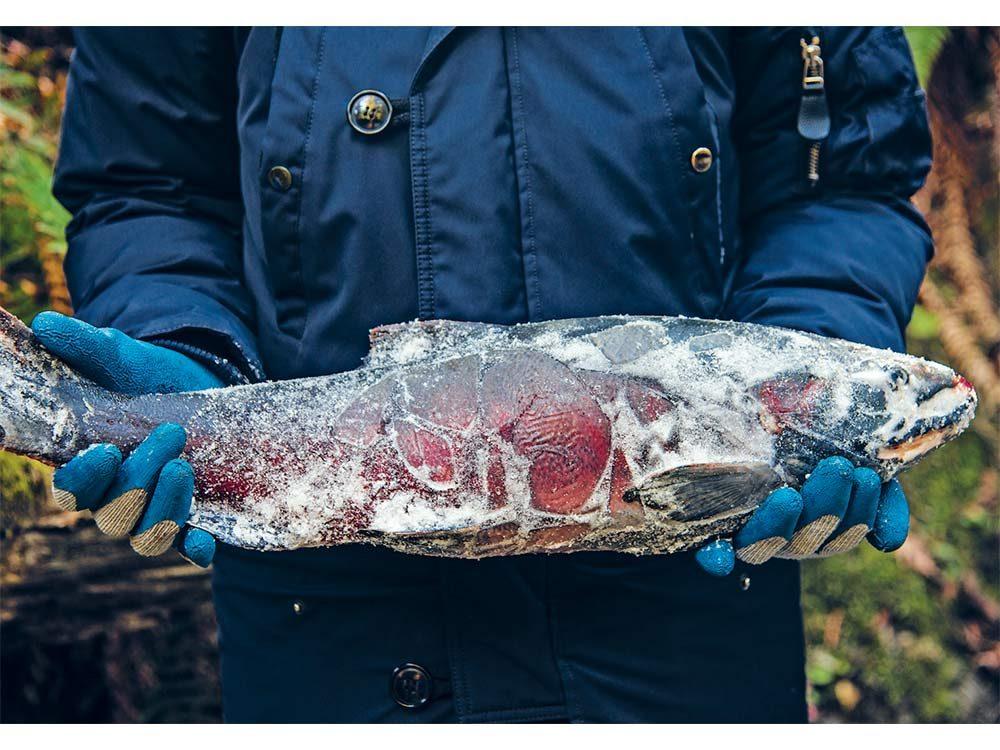 Frozen dead fish carcass