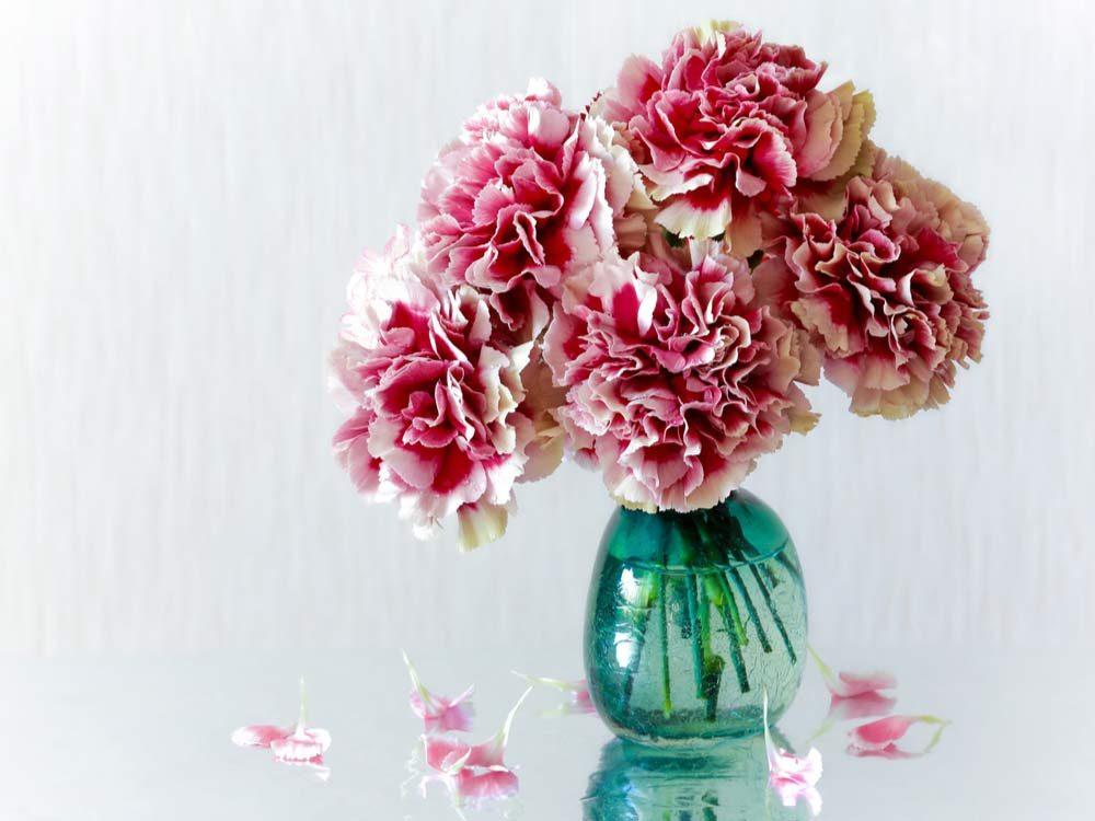 Pink carnations in vase