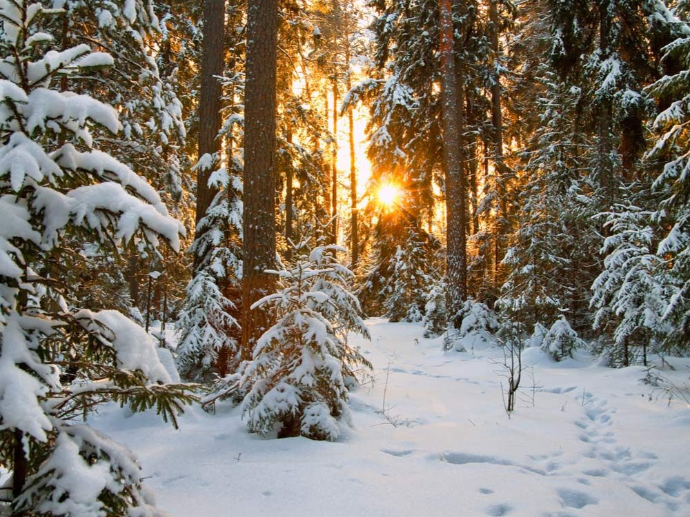 Snowy forest landscape