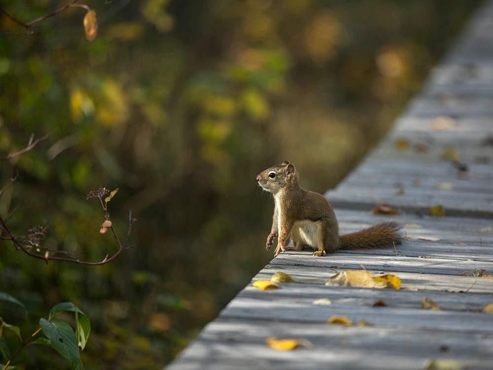 Squirrel at nature sanctuary