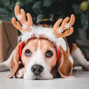 Holiday safety tips - Dog sitting next to Christmas tree