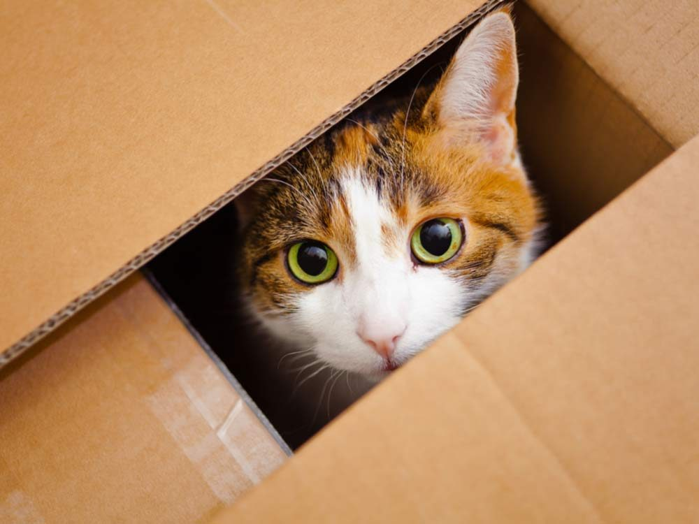 Cat hiding in cardboard box