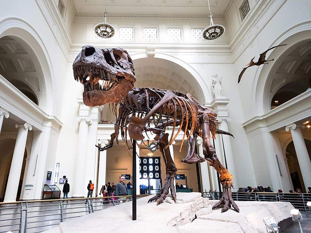Dinosaur fossils at museum