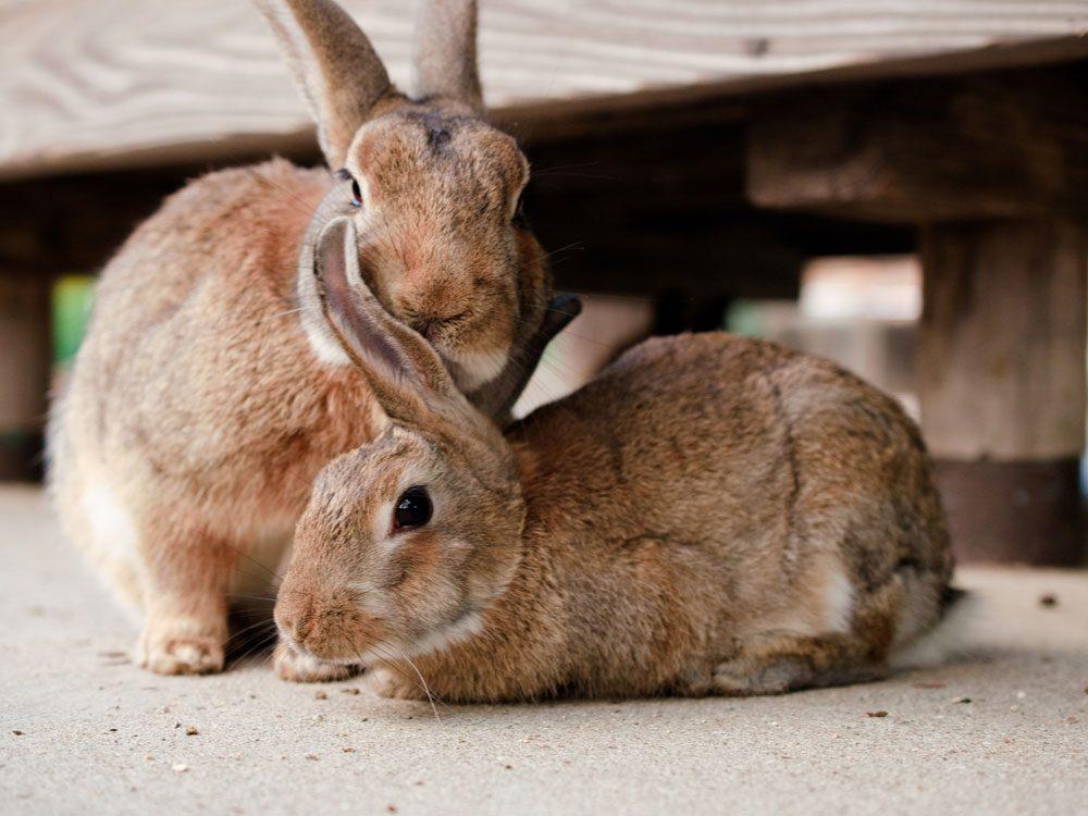 Bunnies in Okunashima