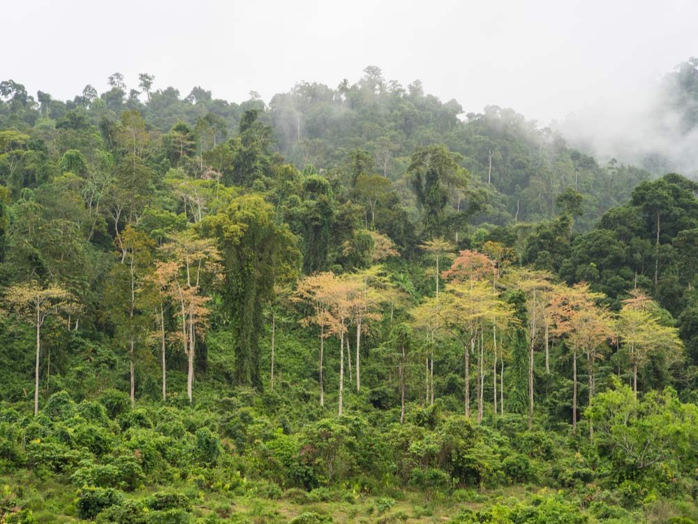 Jungle in Vietnam