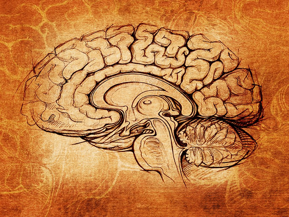 Illustration of brain