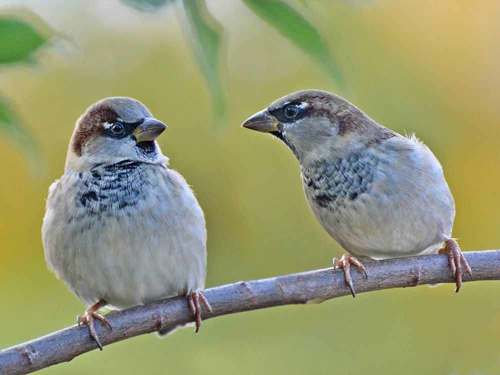 Two sparrows on a fall day