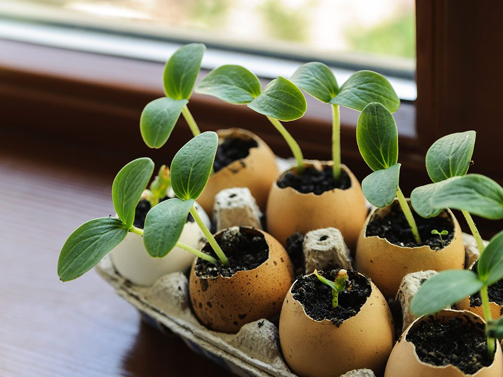 Windowsill vegetable garden