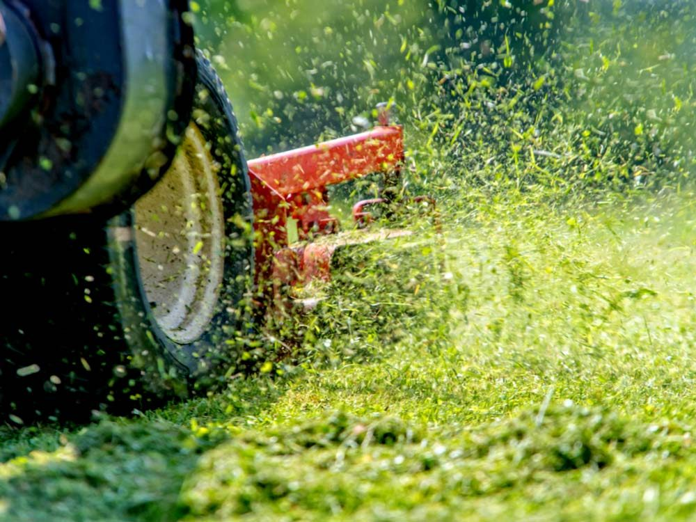 Mowing lawn with clippings flying everywhere