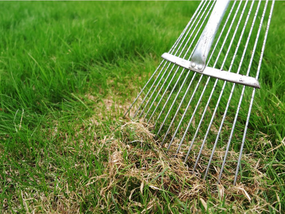 Dethatching lawn with a rake