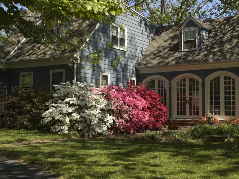 Pretty old house with azaleas in front