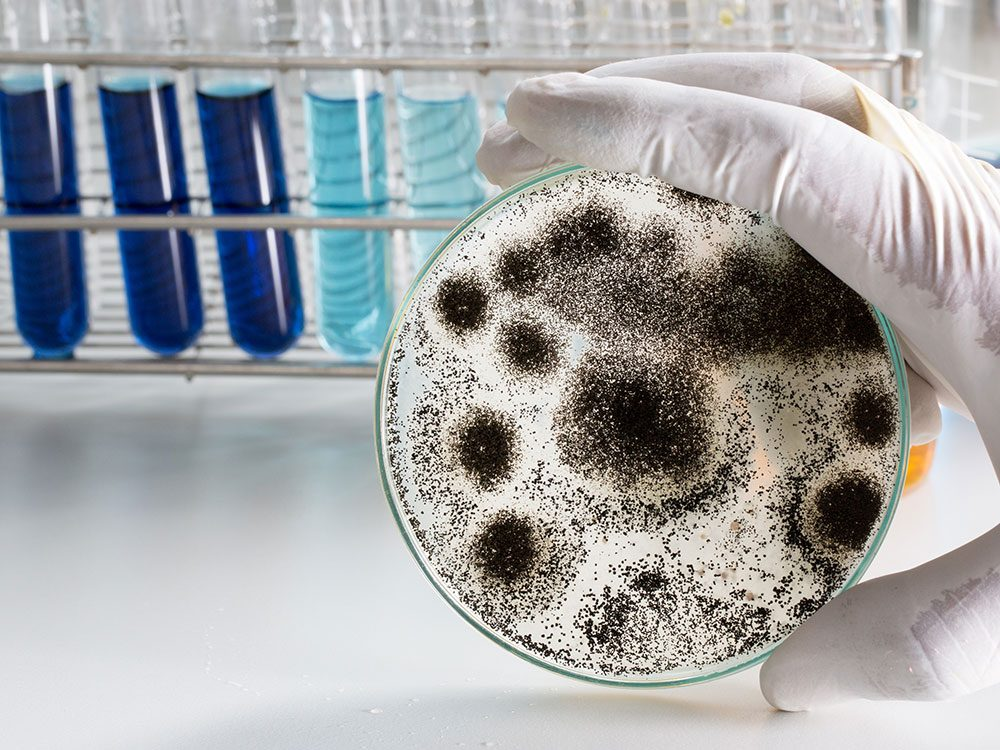 Health problems caused by aspergillus mold