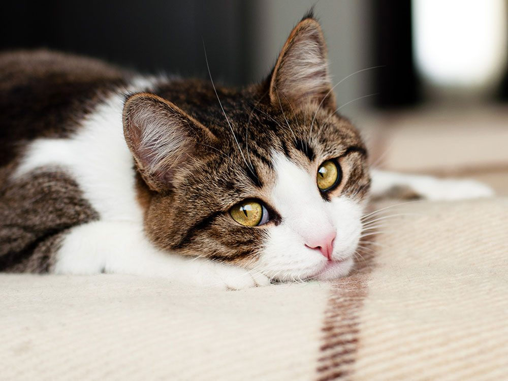 Signs your cat is depressed