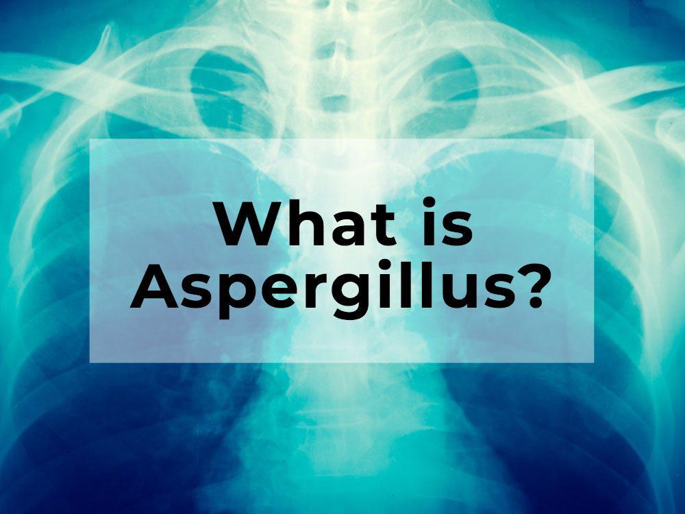 What is Aspergillus?