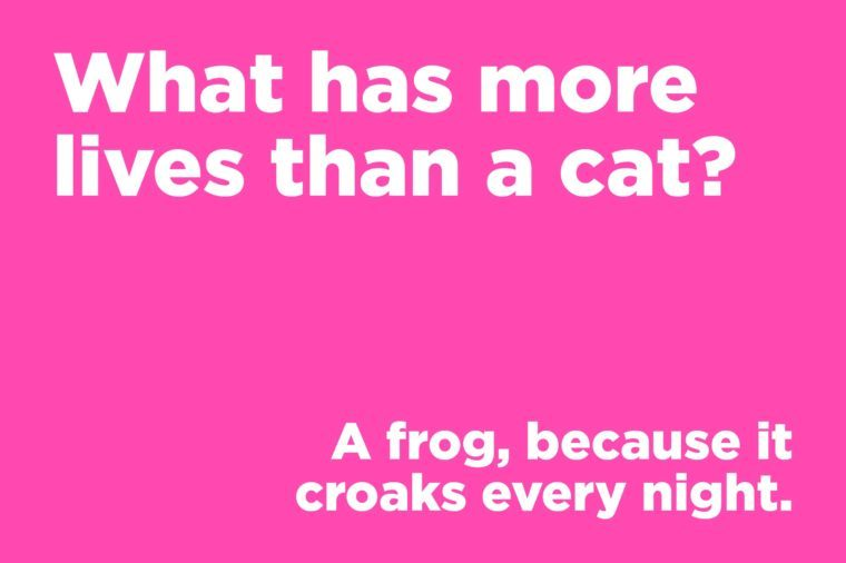 Corny jokes - what has more lives than a cat?