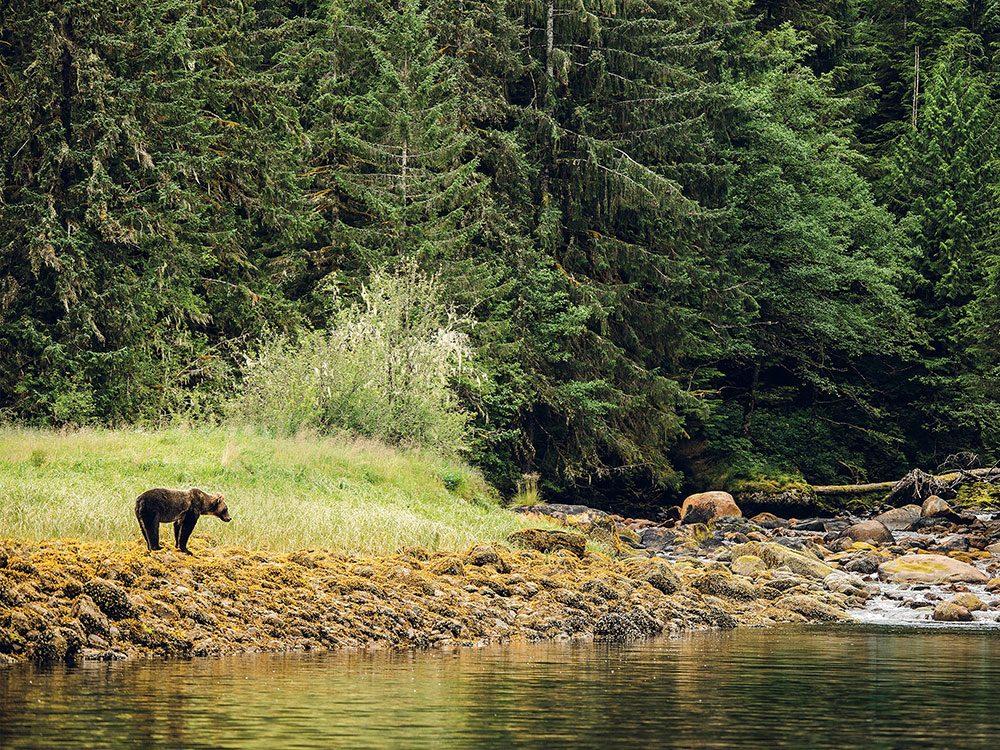 Khutzeymateen Grizzly Bears Sanctuary