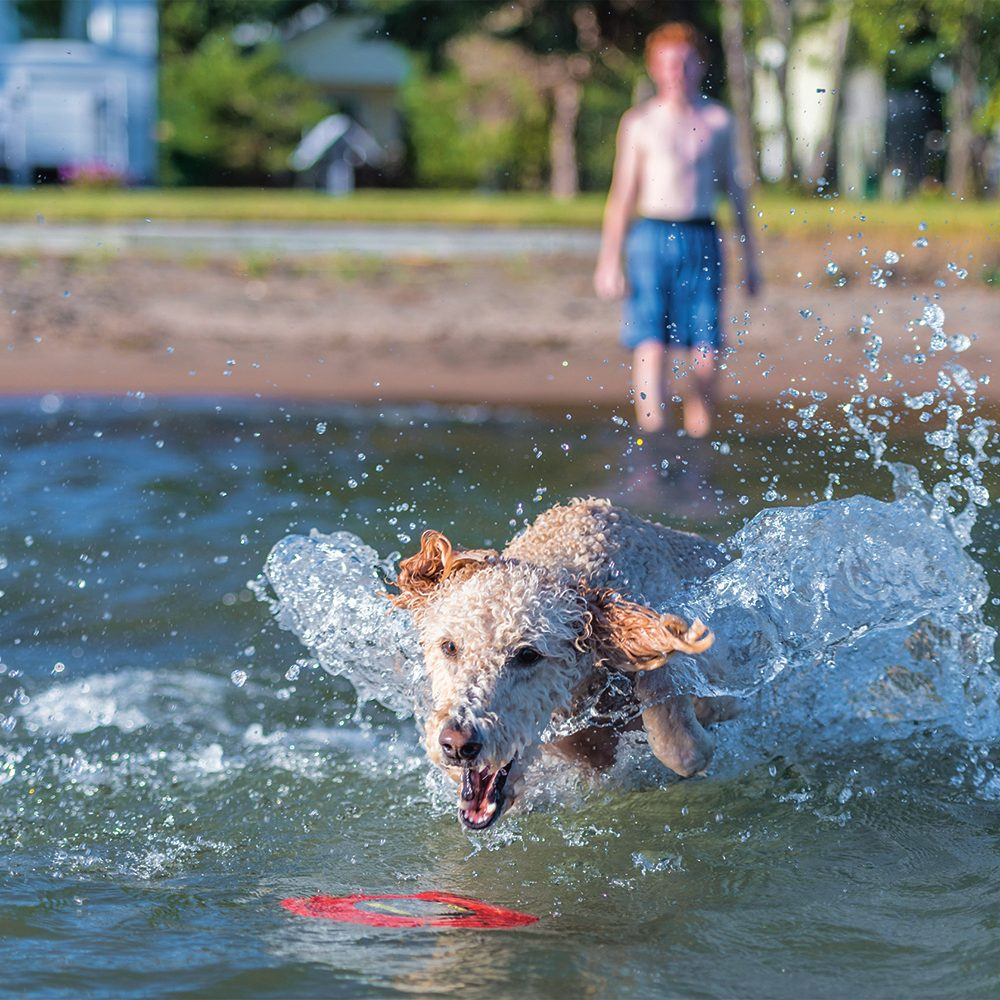 Making a splash water photography - dog in water