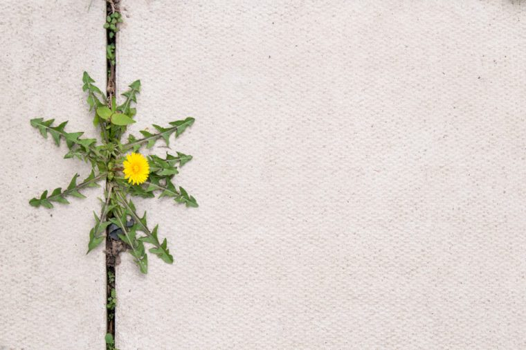 Garden weed