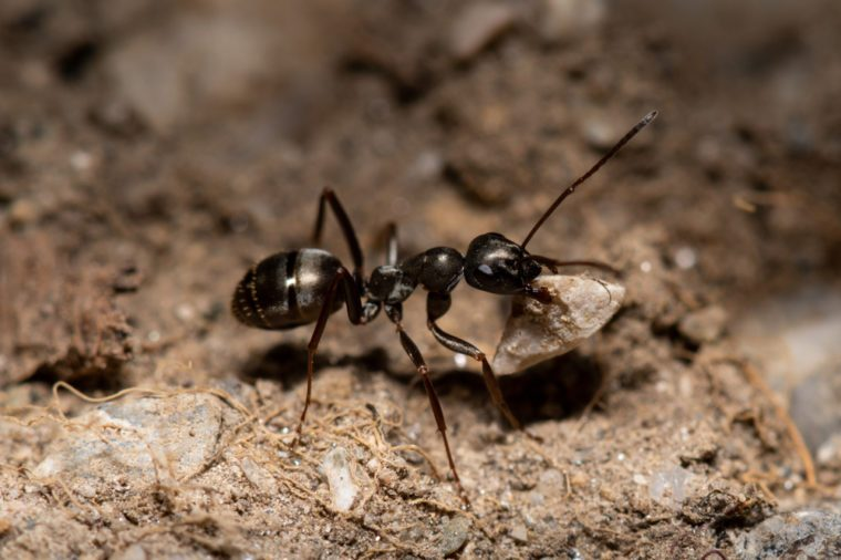 Two ants in anthole