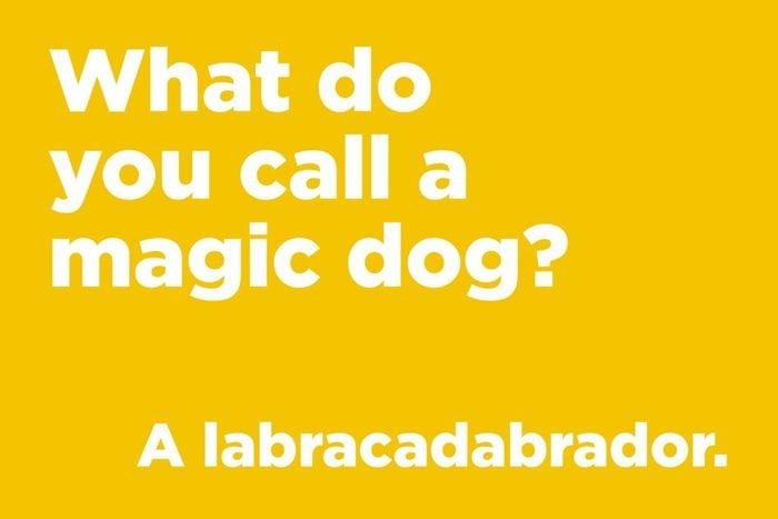 Magic dog joke