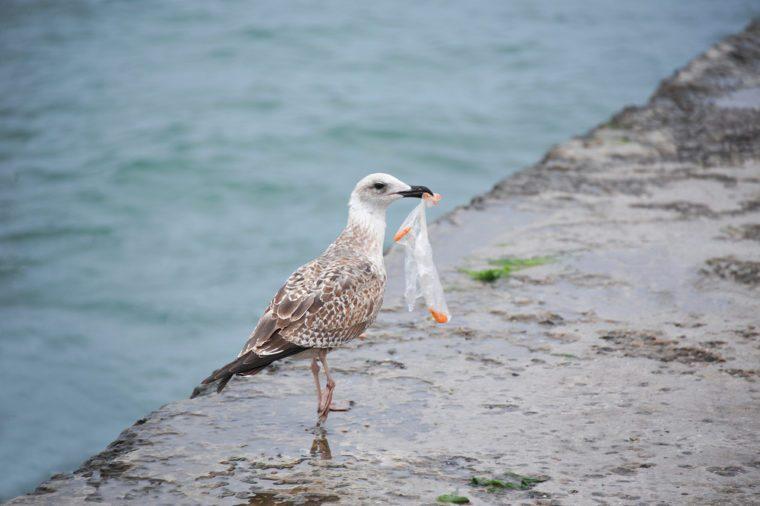 Seabirds are ingesting plastic