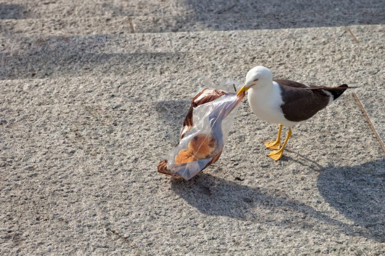Plastic's chemicals can harm marine life