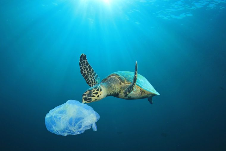Marine mammals are suffering
