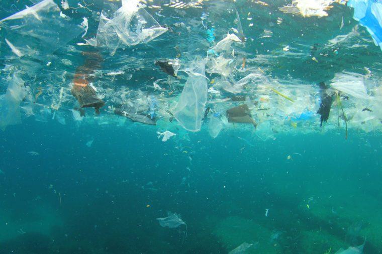 Microplastic impacts marine life