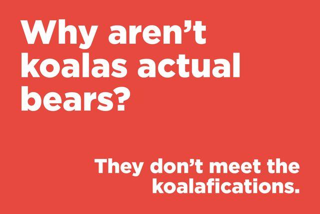Why aren't koalas actual bears?