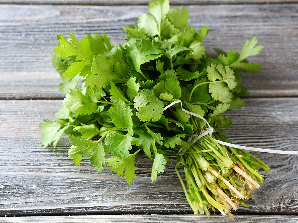 Healing herbs and spices: cilantro