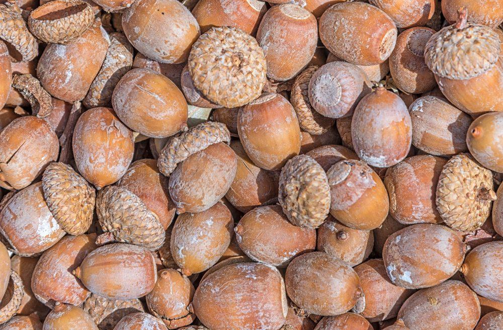 Mechanics found acorns in this car